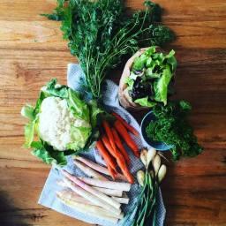 diversite-legumes-2
